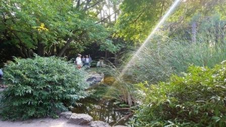 margitsziget;japánkert;napsugár