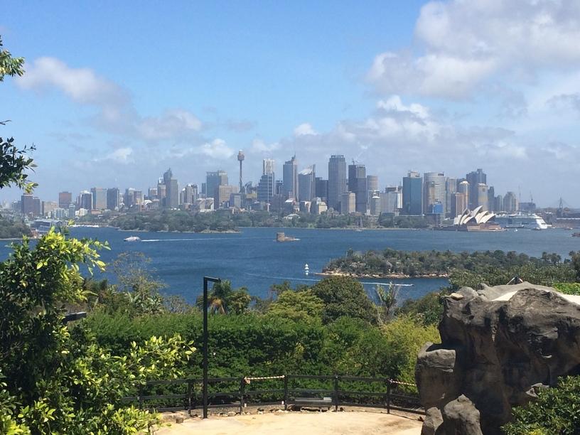 Sydney látképe az állatkertből nézve