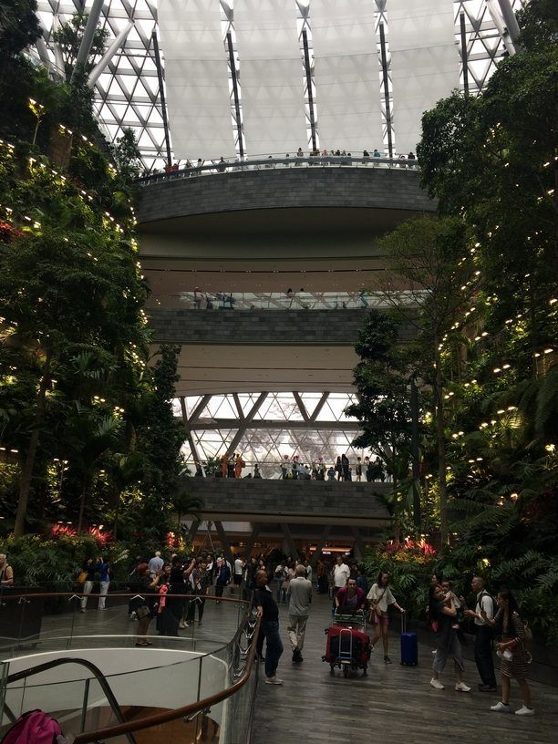 Orchideák a Changi repülőtéren