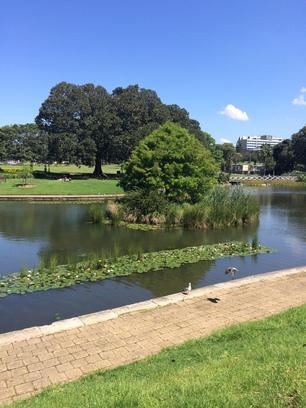 Oázis a belváros szívében, Sydney