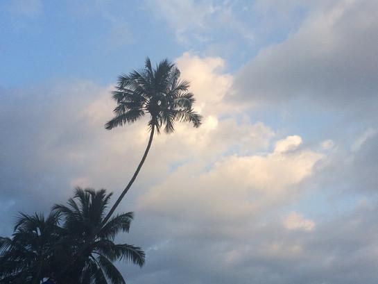 Pálmafa a tengerpartnál