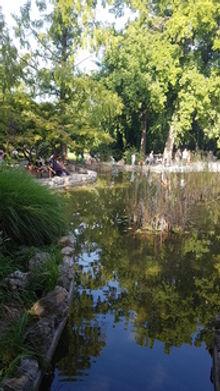margitsziget;japánkert; tó