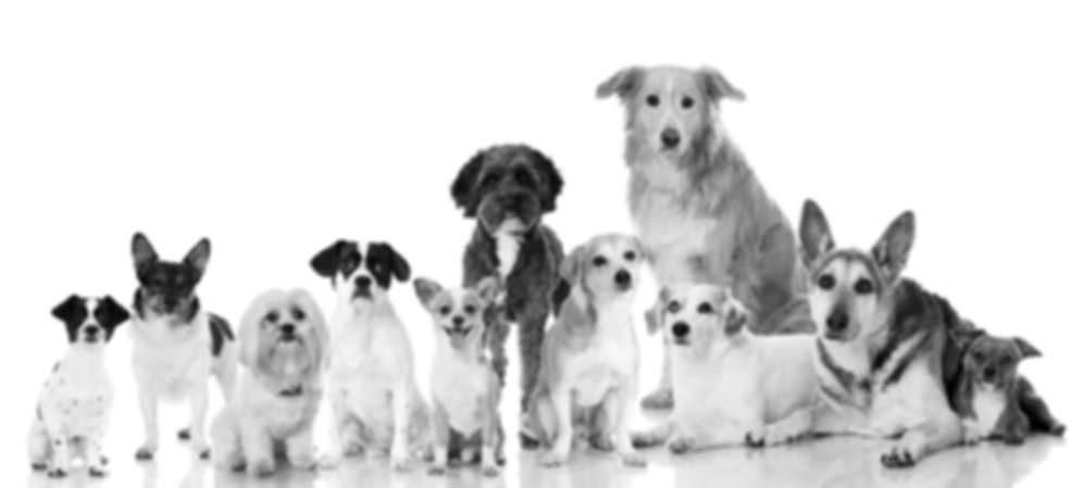 dogs12bw.jpg