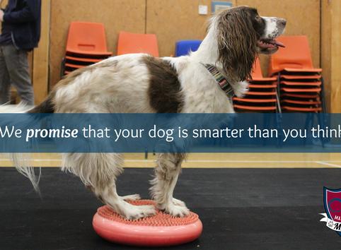"""Blog: """"My dog is dumb"""""""