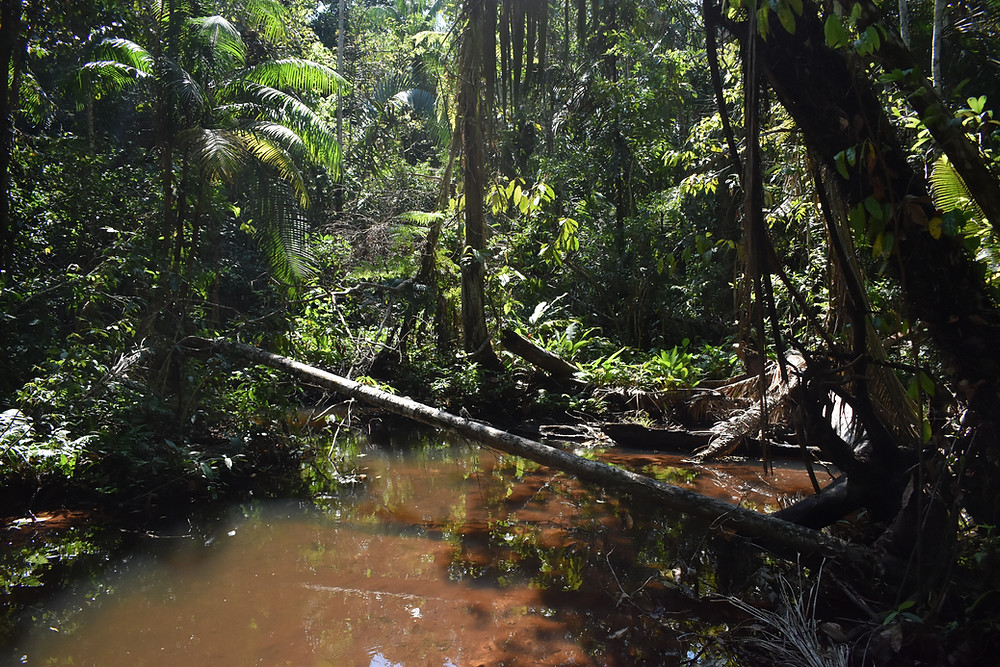 Santa Rosa river curving through tropical forest