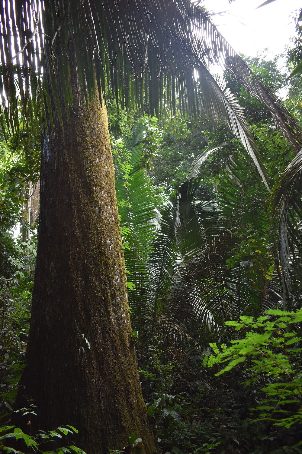 A tropical forest scene, with a tall thick tree trunk surrounded by lush diverse foliage