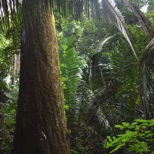 Postcard from the Field: Brazil Nuts and Rainforest Biodiversity