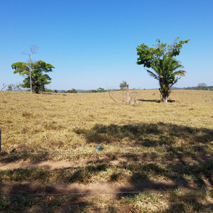 Research Memo: Identifying Pasture with Trees in Satellite Imagery