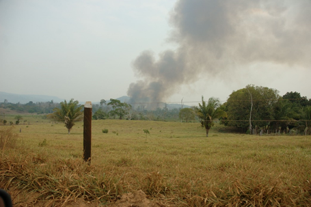 A pasture with a few palm trees. A billowy plume of smoke comes from forest on the horizon against a grey hazy sky.