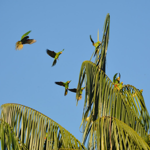 Postcard from the Field: An Abundance of Rainforest Wildlife