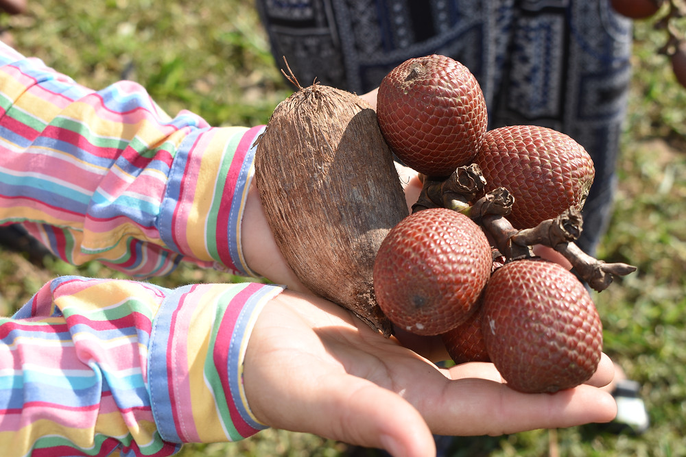 Two open hands holding out palm nuts