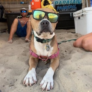 dewey-beach=parasail-dog-mascot-beach.jp