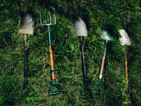 Dig Once, Party Twice: Plant Bulbs When Dividing Perennials