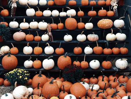 Six Spooky Plants To Celebrate the Halloween Season