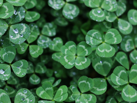 The Plant Lover's Guide to Celebrating St. Patrick's Day