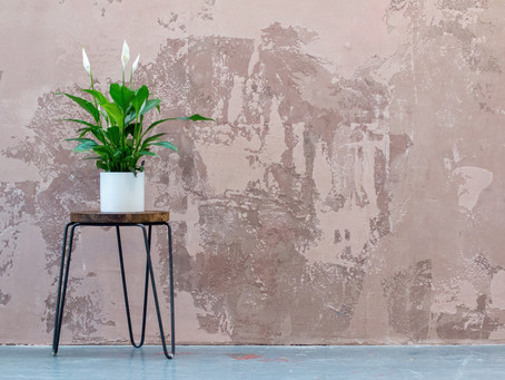 Three Lucky Plants to Ring in the New Year