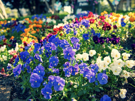 Get Ready for Spring Flowers!