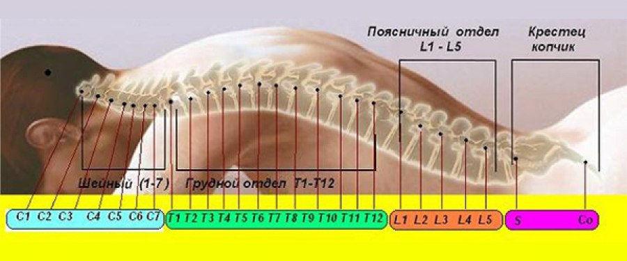 Комплексная коррекция спины