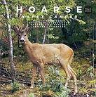 hoarse.jpg