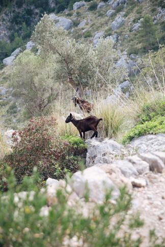 Mallorca-ASI-Reisen0278.JPG