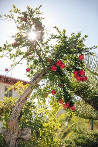 Mallorca-ASI-Reisen0415.JPG