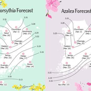 ดอกไม้บานสะพรั่งบนเกาะเชจู 12 มีนาคมนี้!