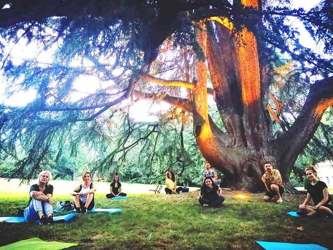 Yoga sotto l'albero secolare