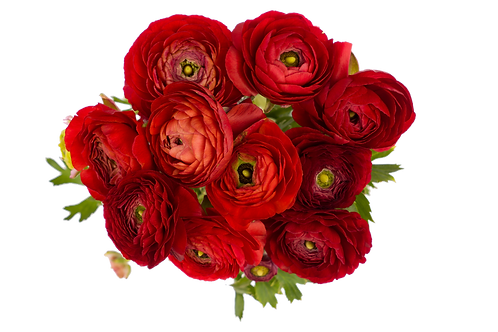 DL Ranunculus Mix CB 10 Stem
