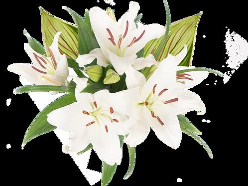 St. Patrick's Day Oriental Enhanced Bouquet