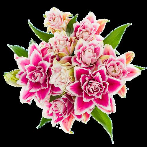 DL Rose Lily Mix CB 5st
