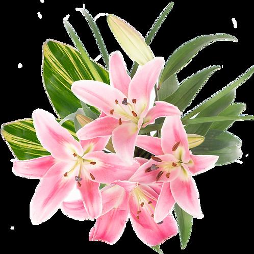 Recital Enhanced Oriental Bouquet