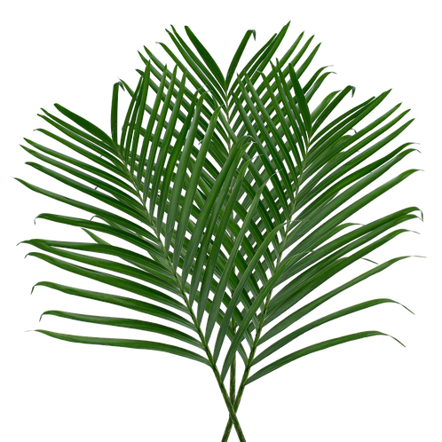 Palm CB 8 Stem