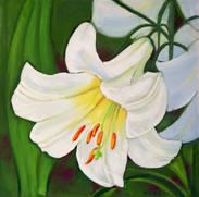 Weiße Lilie