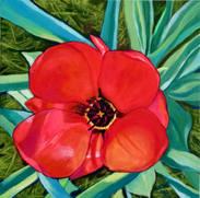 Tulpe 1