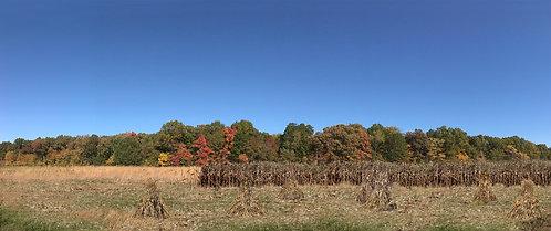 HA51057 - Autumn Harvest, Scenic Backdrop