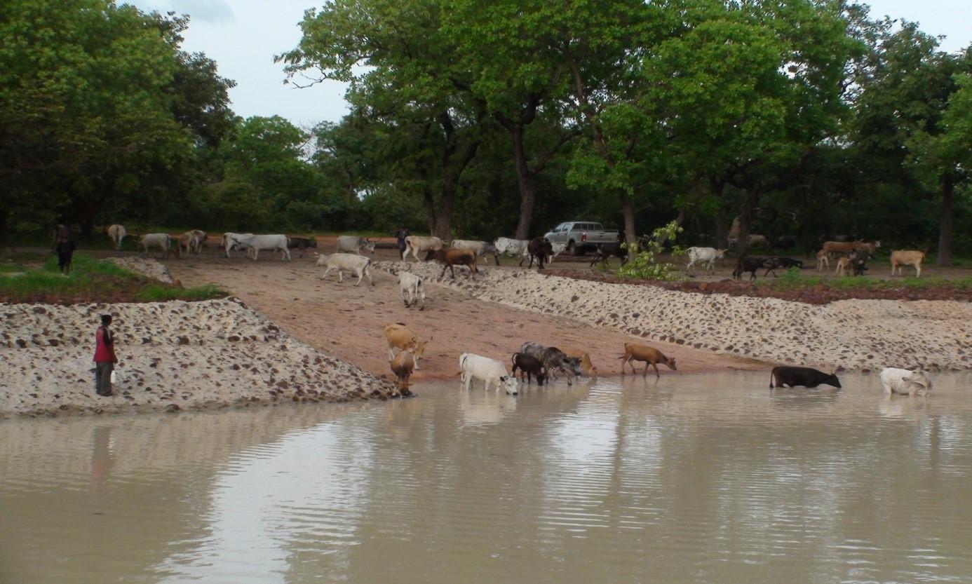 Mare de Pakour au Sénégal