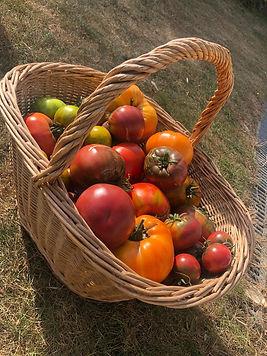 Panier tomates 2 Diane.JPG