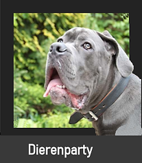 Dierenparty.png