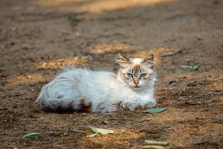 Mediterranean cats IV