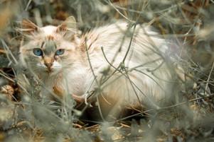 Mediterranean cats IIII