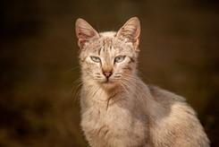 Mediterranean cats II