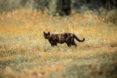 Mediterranean cats VII