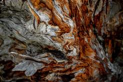 The art of logs.jpg