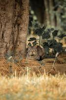 Mediterranean cats VI