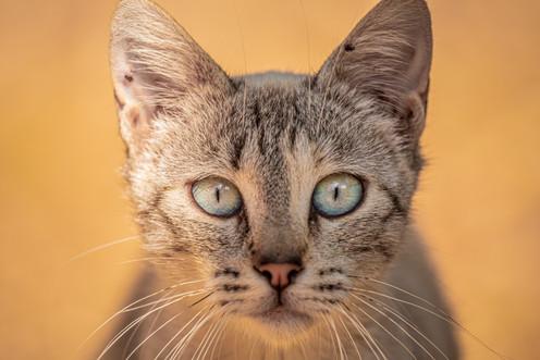 Mediterranean cats I