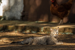 Mediterranean cats III