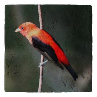 Scarlet Tanager Stone Trivet