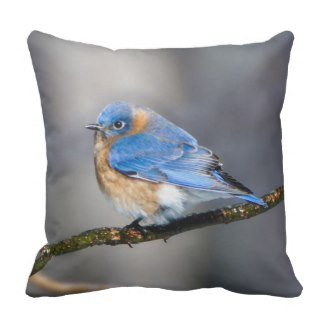 Eastern Bluebird on Ice Covered Limb Throw Pillow