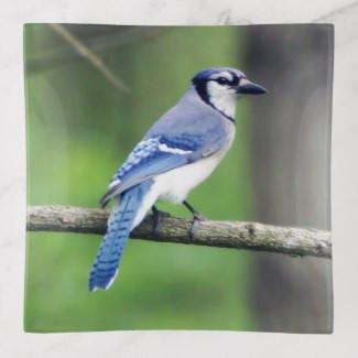 blue_jay_glass_trinket_tray-rc409537ee33