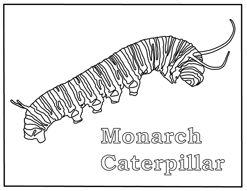 Free Monarch Caterpillar Coloring Page, Free Digital Stamp, Monarch Butterfly